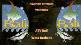 ATV Bali - Aquarium  Terrarium Vereniging in West Brabant