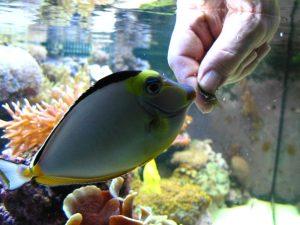 tony-voert-vissen