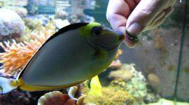 tony-voert-vissen2