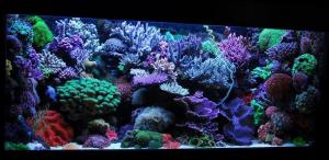 zeewater 2015-mvantermeij