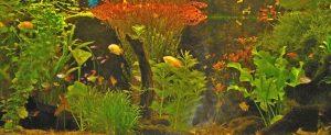 aquarium-herman-kl