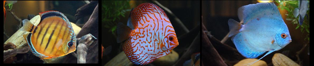 Aquarium Terrarium Vereniging Bali