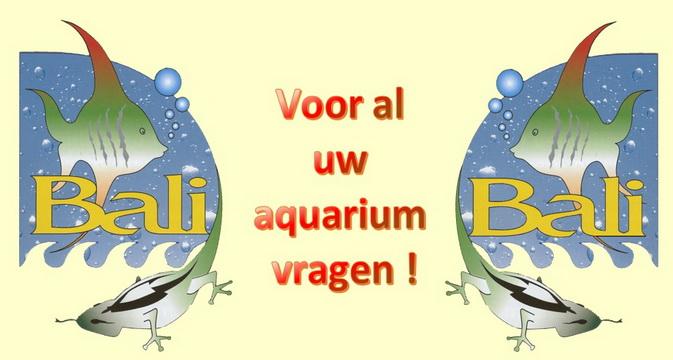 http://www.atvbali.nl/ik-heb-een-vraag/
