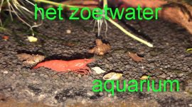 Het zoetwateraquarium